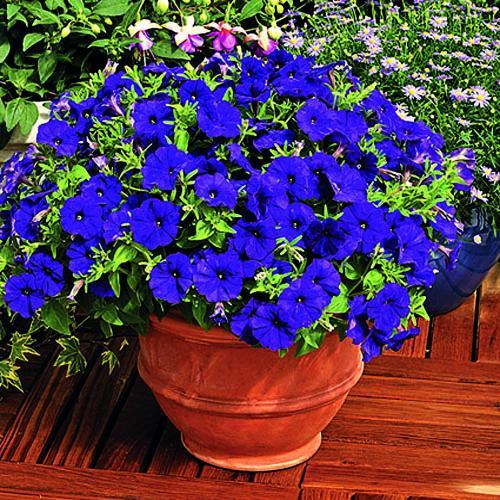33 Beautiful Flower Beds Adding Bright Centerpieces To: 25 Beautiful Backyard Ideas For Growing Petunias In Containers