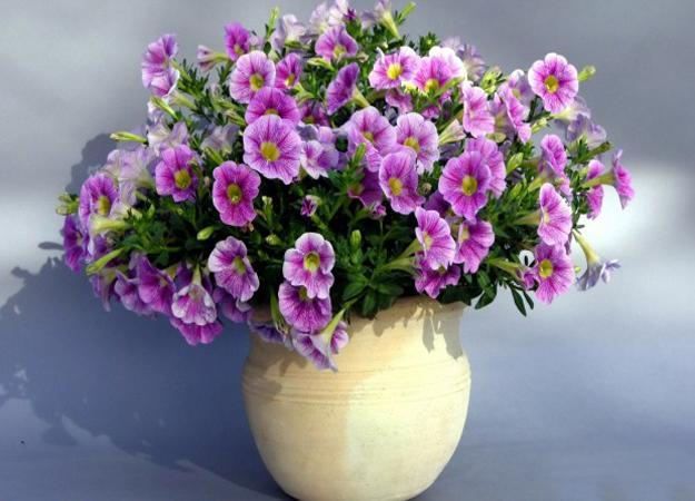 25 beautiful backyard ideas for growing petunias in containers pink and white flowers petunias in decorative ceramic container mightylinksfo