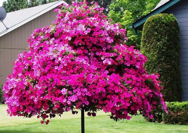 15 Striking Petunia Centerpiece Ideas For Garden Design And Yard