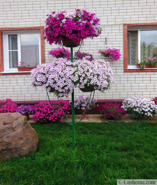 petunia centerpiece ideas for yard landscaping