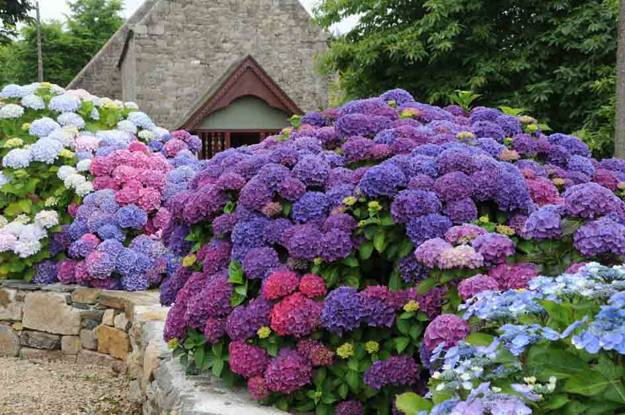 hydrangeas, garden design and yard decorations
