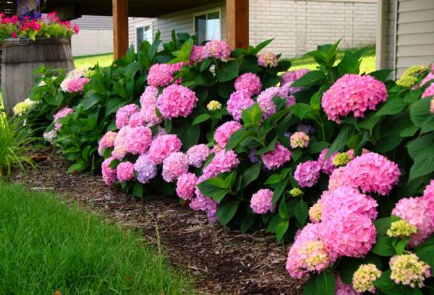 20 Ideas For Outdoor Home Decorating With Hydrangeas