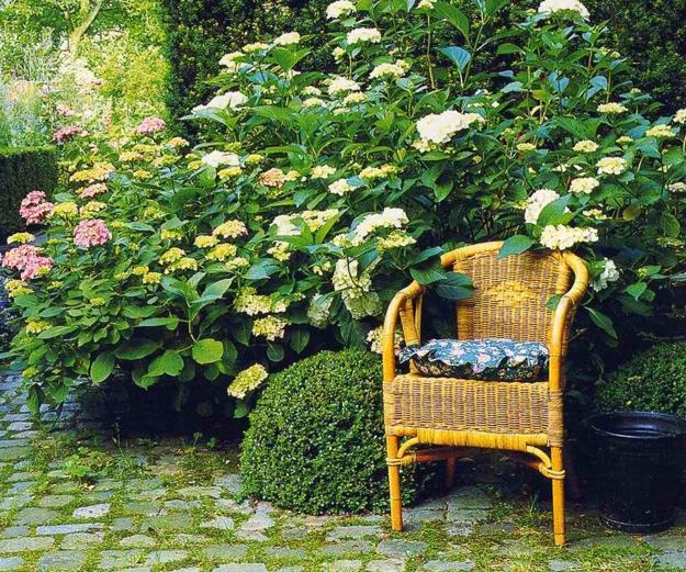 15 Beautiful Backyard Ideas For Hydrangea Shrubs Blending