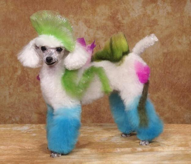 Modern Ideas And Creative Color Design For Stylish Pets