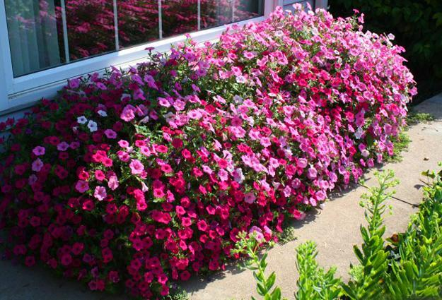 garden design and yard landscaping with flowering plants
