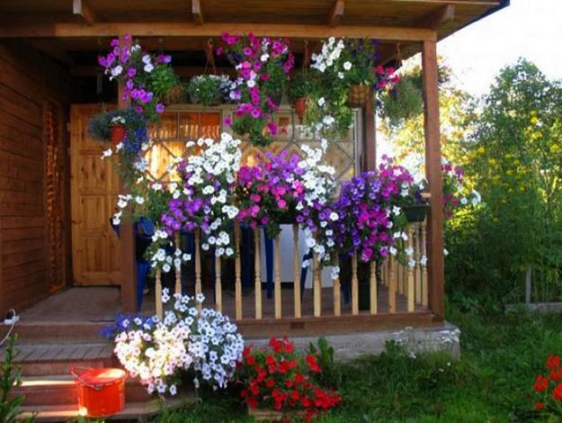 Home Design Ideas Decorating Gardening: Outdoor Home Decorating With Petunias Waves Of Color