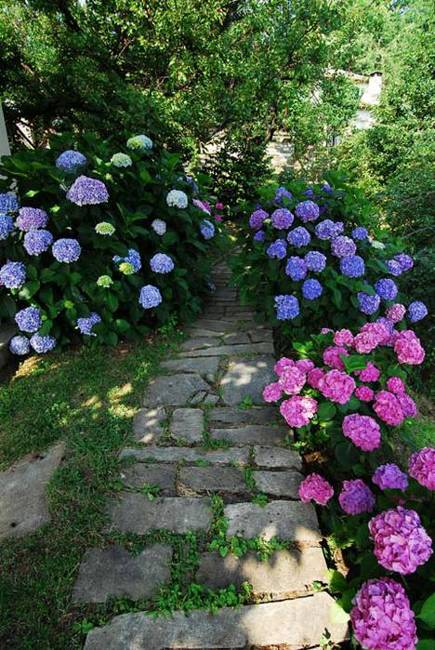backyard designs with hydrangeas, flowering plants