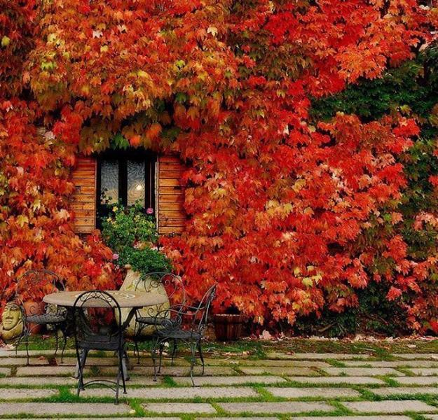 Modern Beautiful Home Gardens Designs Ideas: Fall Leaves Decorating Gardens And Backyards For Outdoor