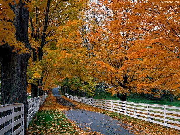 landscaping ideas and planting trees along country roads and town paths to add fall colors to landscapes