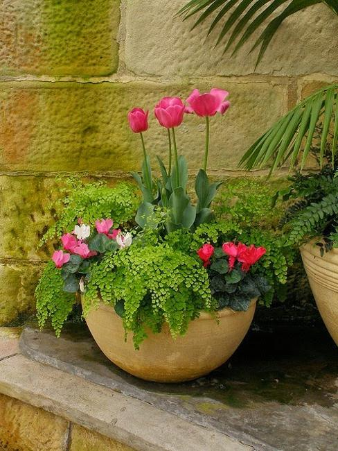 flowering plants for interior decorating, gifts and garden design