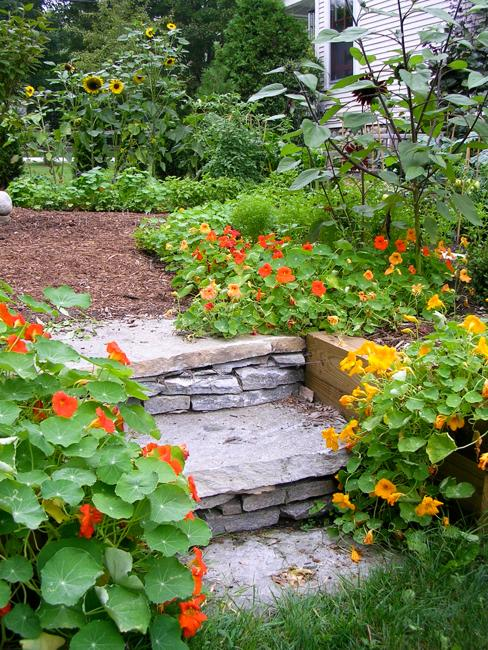 Growing Bright Edible Flowers for Outdoor Home Decorating ...
