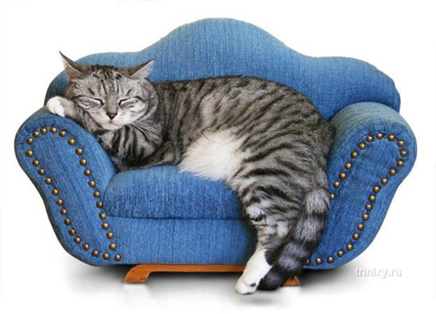 Blue Sofa Cat Furniture