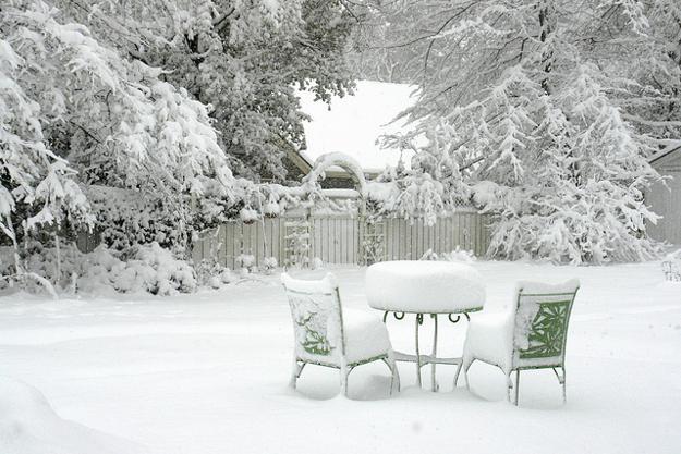 Outdoor Furniture And Evergreen Plants In Winter Garden