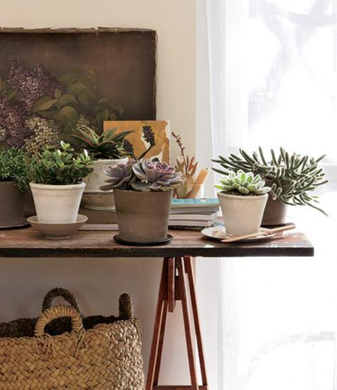 Fresh Indoor Plants Decoration Ideas For Interior Home: Low Maintenance Modern Interior Decorating With House Plants