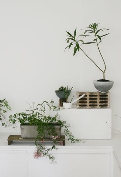 green accessories, indoor plants and room decorating ideas