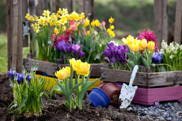 Colorful Spring Flowers And Yard Landscaping Ideas