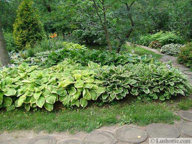 Modern Pool Landscaping Plants
