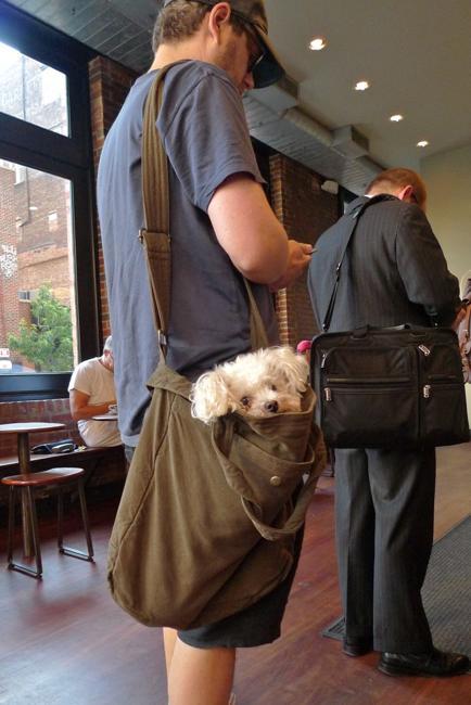 design ideas for modern dog bags