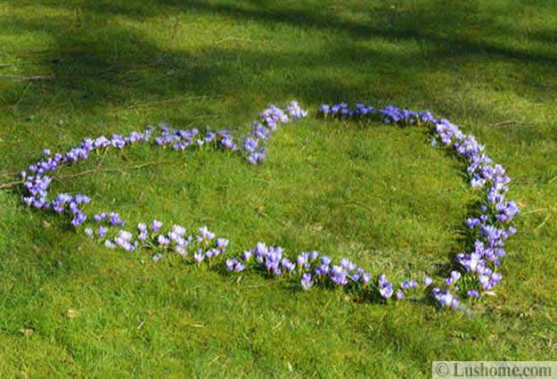 beautiful flowers crocuses for garden design