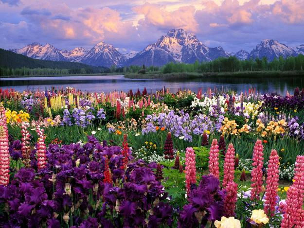 Lupines Are Beautiful Flowers For Low Maintenance Yard Landscaping And  Natural Garden Design