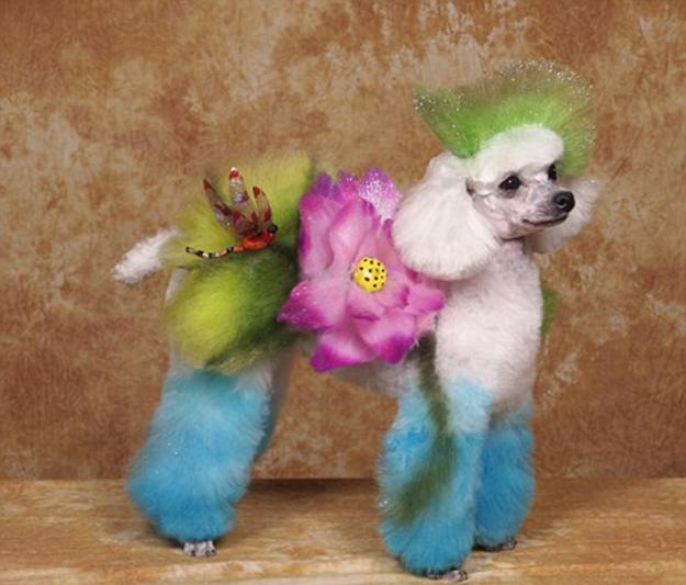 colorful grooming designs for furry cats and dogs