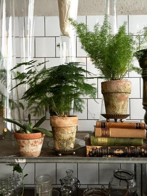 Great house plants for decorating small apartments and homes - Indoor plant decor ideas ...
