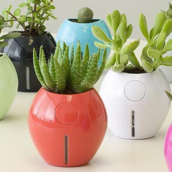 Great House Plants for Decorating Small Apartments and Homes