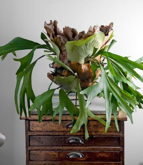 Modern Home Decorating: Great House Plants For Decorating Small Apartments And Homes