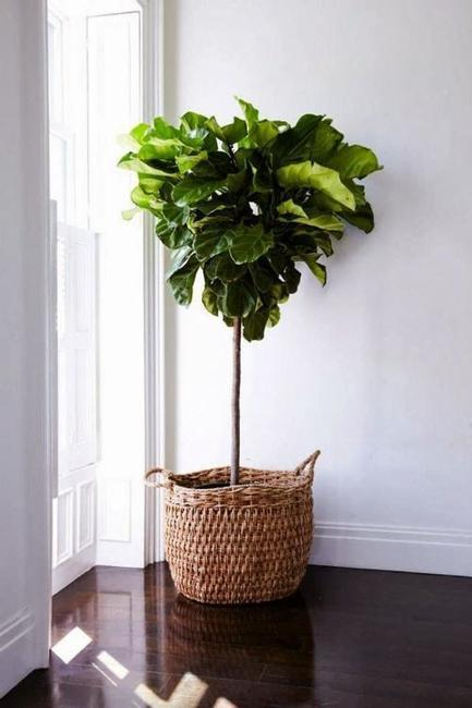 Small House Space Saving Design: Great House Plants For Decorating Small Apartments And Homes