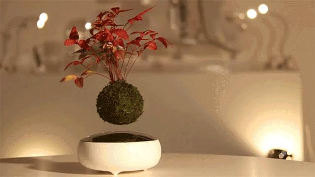 Stunning Table Centerpiece Ideas Floating In The Air Bonsai Trees