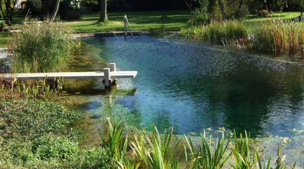 yard landscaping ideas with natural ponds for swimming