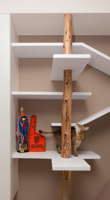 wall shelves pet furniture design idea to please cats. Black Bedroom Furniture Sets. Home Design Ideas