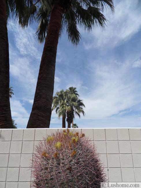 desert plants and yard landscaping ideas