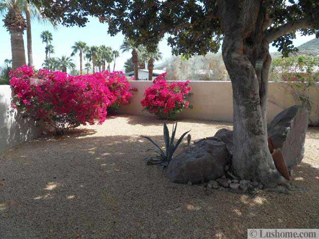 These Smashing Backyard Ideas Are Hot And Happening: Desert Landscaping Ideas To Save Water And Create Low