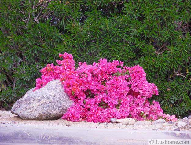 Spring Flowers For Desert Garden Designs