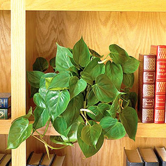 Houseplants Green Air Filters And Bright Accents For