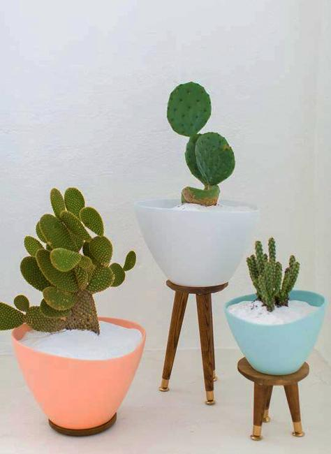 Interior Decorating With Cacti And Good Feng Shui
