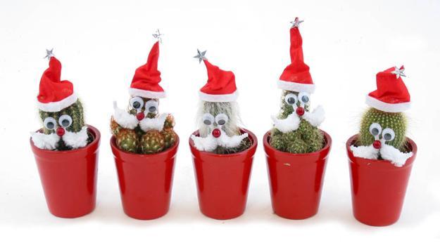 original ideas for christmas decorating houseplants - Decorating Cactus For Christmas