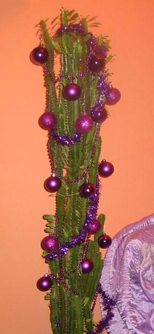 Cacti Adding Desert Vibe To Alternative Christmas Tree