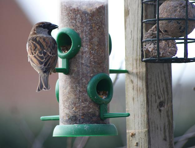 Adding Bird Feeders To Your Winter Garden Easy Ways To