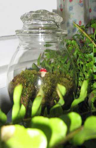 Diy Plants Terrariums Enchanted Miniature Garden Designs