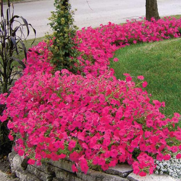 12 Amazing Ideas For Flower Beds Around Trees: Petunias, Spectacular Flowering Plants For Beautiful Yard