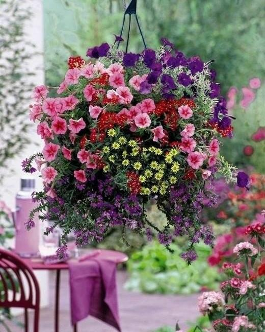 hanging basket with flowers