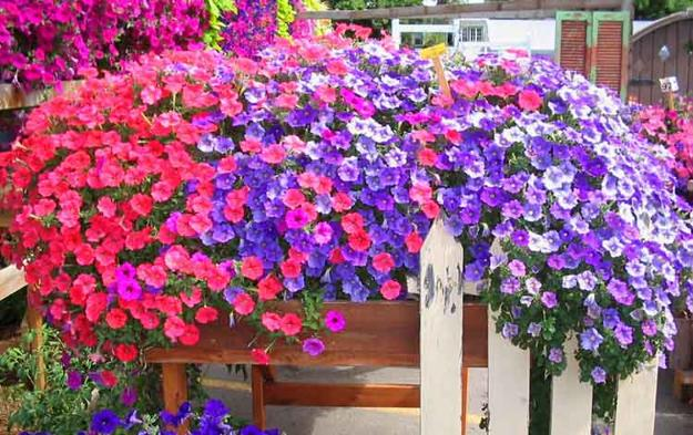Petunias Spectacular Flowering Plants For Beautiful Yard