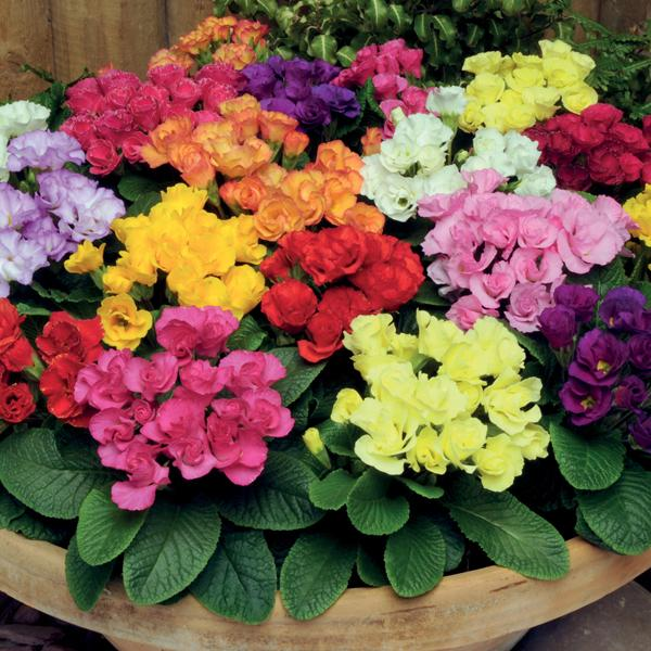Spring Flowers And Yard Landscaping Ideas 20 Tulip Bed: Primulas, Spring Blooming Plants For Your House And Yard
