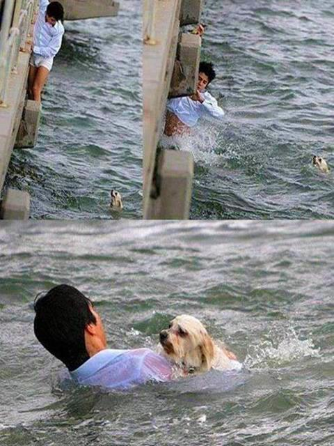 a swimming man is rescuing a dog