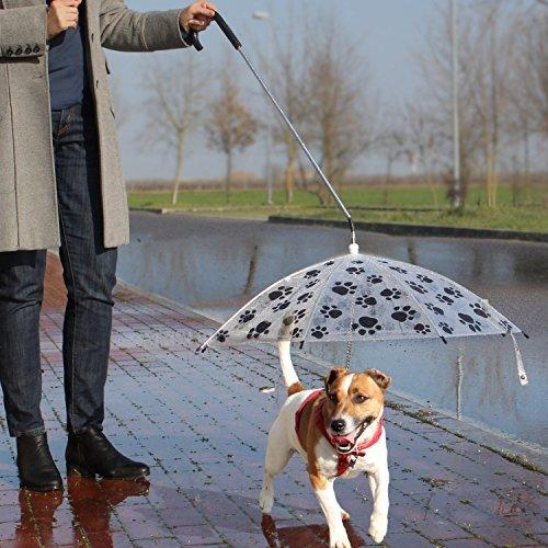 Pet Design Ideas Dog Umbrellas To Protect Four Legged Friends