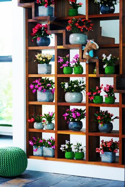 shelf decoration with flowering plants and vases
