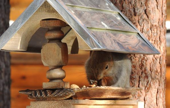 diy yard decorations  squirrel house designs to build and feed animals in winter