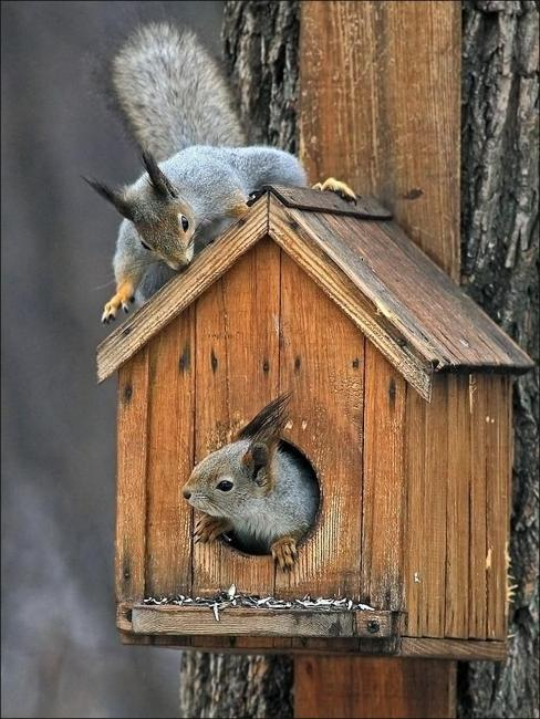 handmade house for squirrels